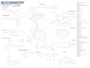 Doctors Notes Medical Biochemistry Poster: Review of Metabolism